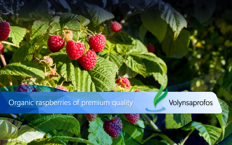 1-Organic-raspberries-of-premium-quality